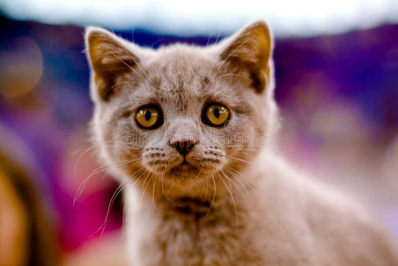 λατρευτό γατάκι στοκ εικόνες με δικαίωμα ελεύθερης χρήσης