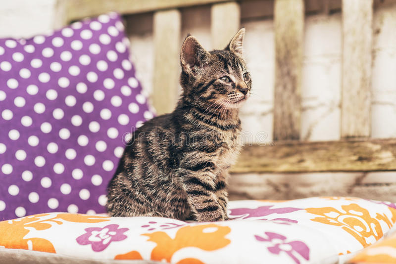 Λατρευτό γκρίζο τιγρέ γατάκι μωρών σε έναν πάγκο κήπων στοκ φωτογραφία με δικαίωμα ελεύθερης χρήσης