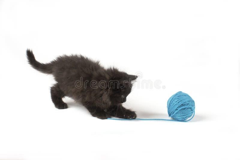 Λατρευτό μαύρο παιχνίδι γατακιών με μια μπλε σφαίρα νημάτων στοκ φωτογραφία με δικαίωμα ελεύθερης χρήσης