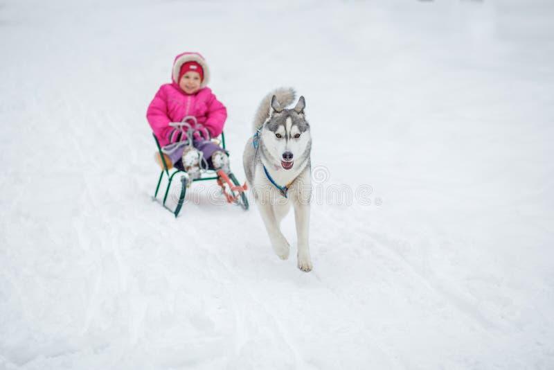 Λατρευτό μικρό κορίτσι που έχει μια αγκαλιά με το γεροδεμένο σκυλί ελκήθρων στοκ εικόνες με δικαίωμα ελεύθερης χρήσης