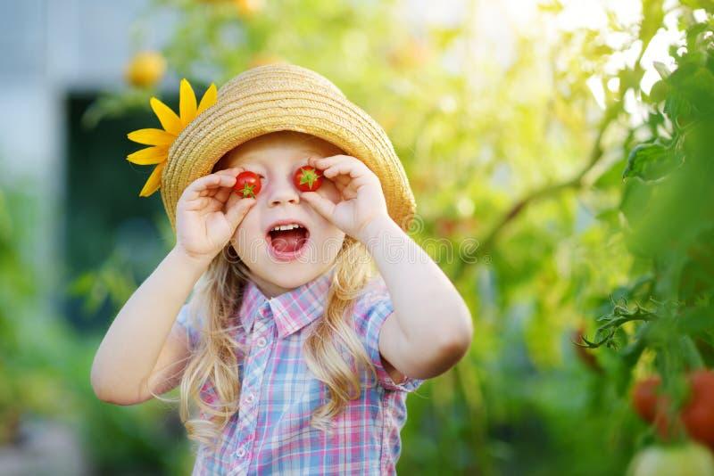 Λατρευτό μικρό κορίτσι που φορά το καπέλο που επιλέγει τις φρέσκες ώριμες οργανικές ντομάτες σε ένα θερμοκήπιο στο θερινό βράδυ στοκ φωτογραφία με δικαίωμα ελεύθερης χρήσης