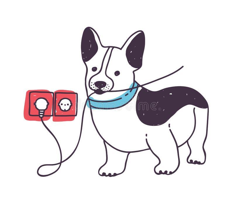 Λατρευτό σκυλί που ροκανίζει ή που τρώει τα καλώδια Αστείο άτακτο κουτάβι ή σκυλάκι που απομονώνεται στο άσπρο υπόβαθρο Κακός, επ ελεύθερη απεικόνιση δικαιώματος