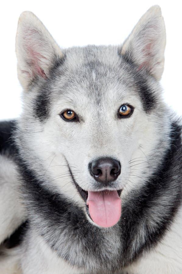 λατρευτό σκυλί στοκ εικόνα