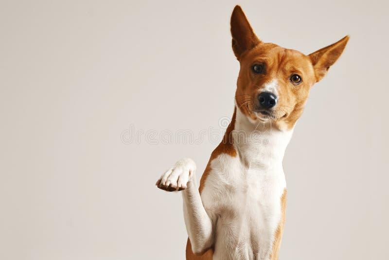 Λατρευτό σκυλί που δίνει το πόδι του στοκ φωτογραφία με δικαίωμα ελεύθερης χρήσης