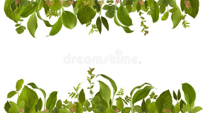 Λατρευτό υπόβαθρο λιβαδιών φύλλων ζουγκλών κήπων στοκ φωτογραφία