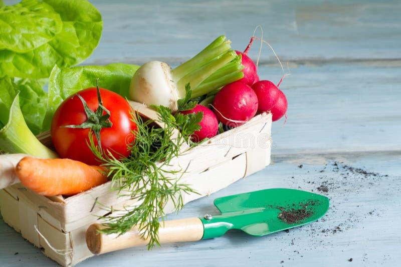 Λαχανικά άνοιξη και εργαλεία κηπουρικής στοκ εικόνες