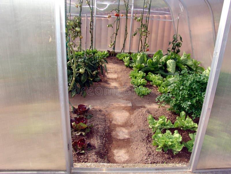 λαχανικά θερμοκηπίων στοκ εικόνα με δικαίωμα ελεύθερης χρήσης