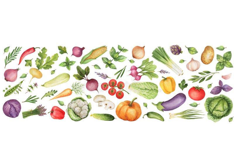 Λαχανικά και χορτάρια Watercolor που απομονώνονται στο άσπρο υπόβαθρο διανυσματική απεικόνιση