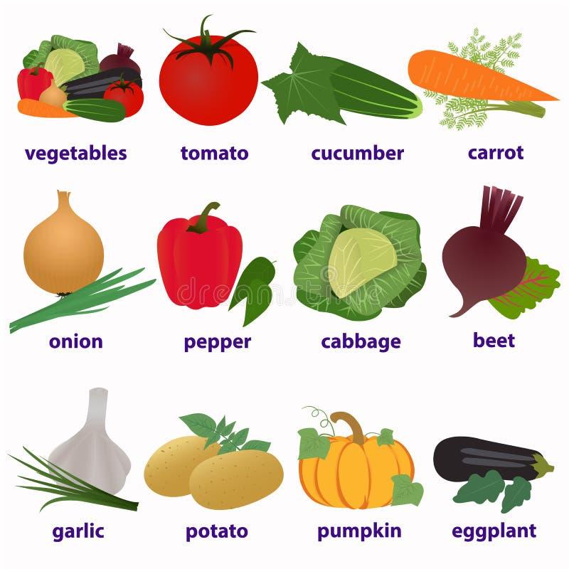 Λαχανικά Της αγγλικής γλώσσας κάρτες διανυσματική απεικόνιση