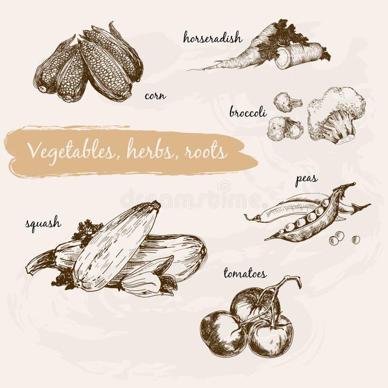 Λαχανικά, χορτάρι και ρίζες διανυσματική απεικόνιση