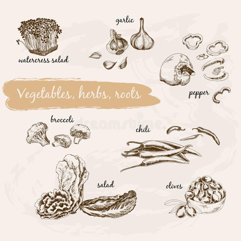 Λαχανικά, χορτάρι και ρίζες ελεύθερη απεικόνιση δικαιώματος