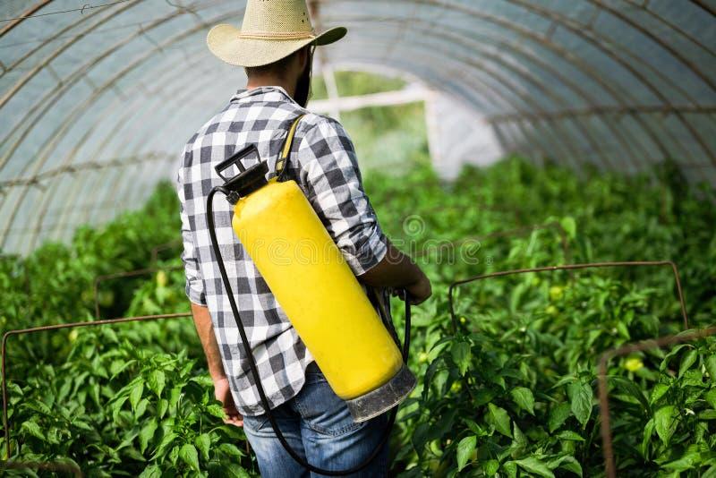Λαχανικά Spaying με τα προϊόντα προστασίας νερού ή εγκαταστάσεων όπως τα φυτοφάρμακα ενάντια στις ασθένειες στοκ εικόνες με δικαίωμα ελεύθερης χρήσης