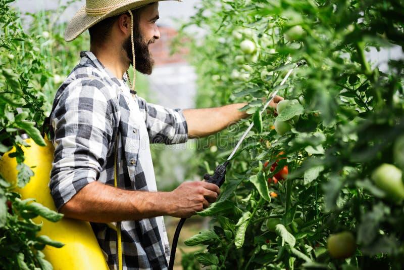 Λαχανικά Spaying με τα προϊόντα προστασίας νερού ή εγκαταστάσεων όπως τα φυτοφάρμακα ενάντια στις ασθένειες στοκ φωτογραφία με δικαίωμα ελεύθερης χρήσης
