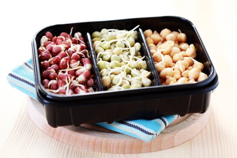 λαχανικό νεαρών βλαστών στοκ φωτογραφία με δικαίωμα ελεύθερης χρήσης