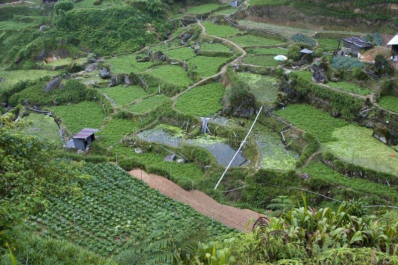 λαχανικό ορεινών περιοχών & στοκ φωτογραφία με δικαίωμα ελεύθερης χρήσης