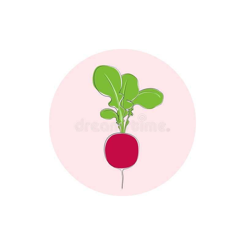 Λαχανικό ραδικιών εικονιδίων με τα φύλλα, διάνυσμα ελεύθερη απεικόνιση δικαιώματος