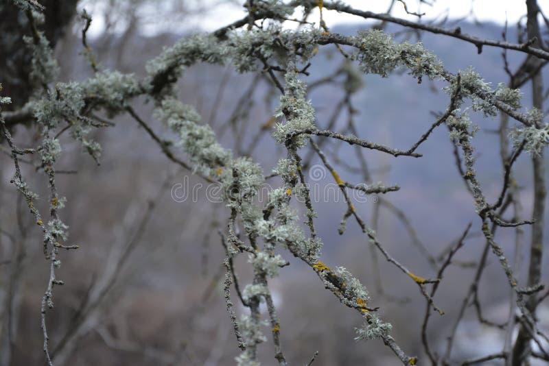 Λειχήνα σε ένα δέντρο το φθινόπωρο στοκ φωτογραφία