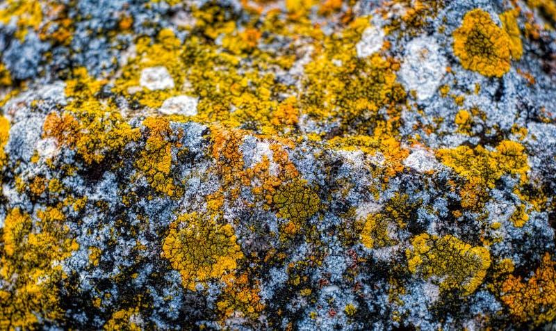 Λειχήνα στο βράχο στοκ εικόνες