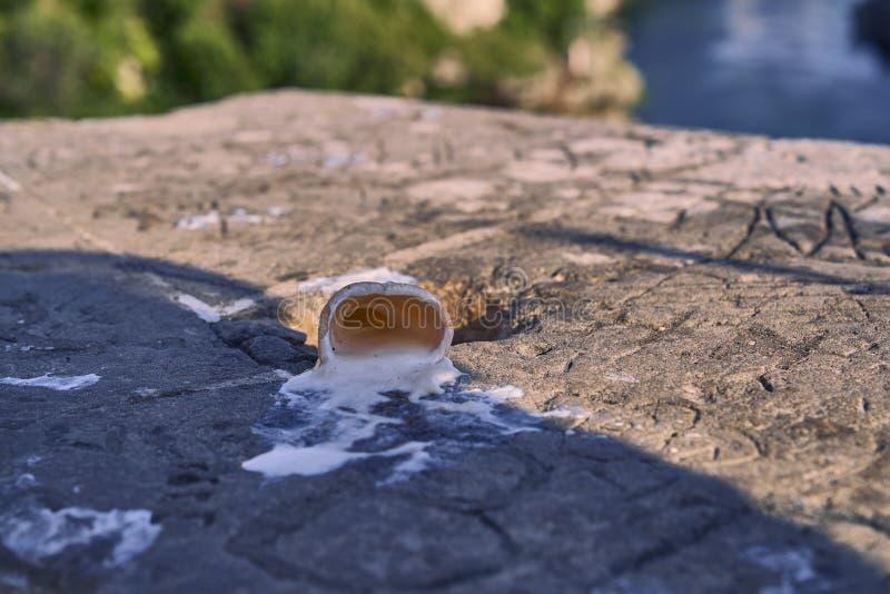Λειωμένο παγωτό σε μια ηλιόλουστη ημέρα στοκ εικόνα με δικαίωμα ελεύθερης χρήσης