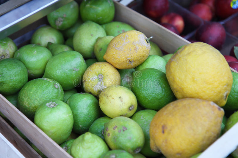 λεμόνια κίτρων στοκ φωτογραφία με δικαίωμα ελεύθερης χρήσης