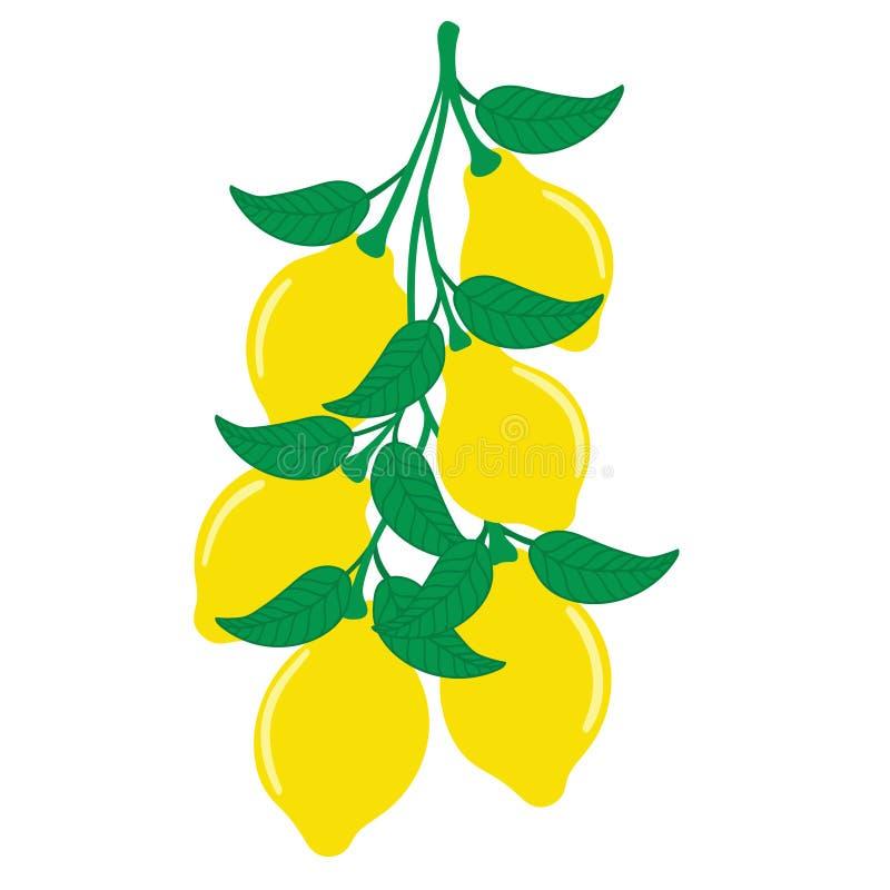 Λεμόνια που κρεμούν σε έναν κλάδο δέντρων στοκ φωτογραφίες