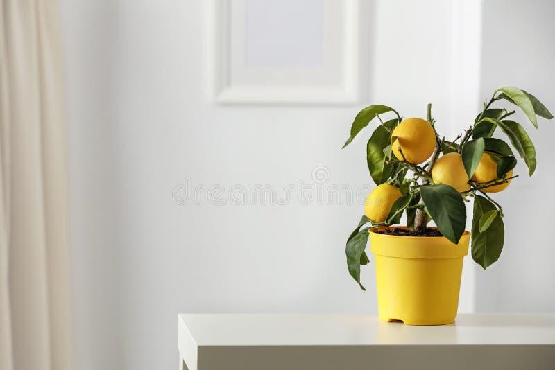 Λεμόνι με κίτρινο δοχείο ροής με έντονα λευκά χρώματα με πλαίσιο εικόνας με θαμπό λευκό φόντο τοίχου στοκ εικόνα με δικαίωμα ελεύθερης χρήσης
