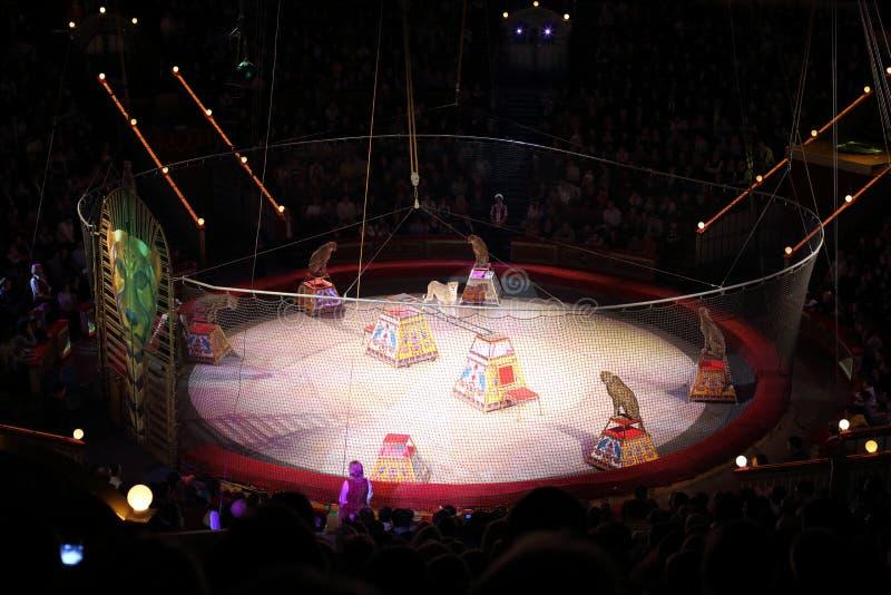 Λεοπαρδάλεις στο χώρο του μεγάλου κρατικού τσίρκου της Μόσχας στοκ φωτογραφία με δικαίωμα ελεύθερης χρήσης