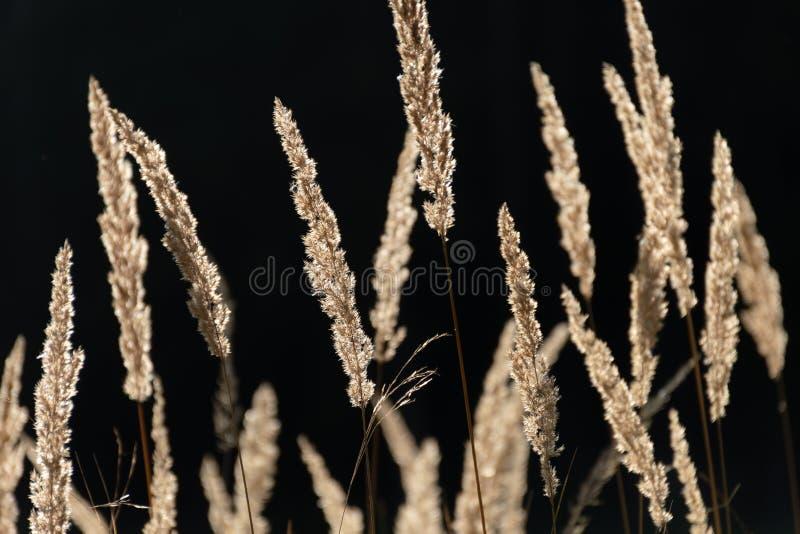 Λεπίδες της χλόης στο θερμό φως του φθινοπώρου στοκ εικόνες με δικαίωμα ελεύθερης χρήσης