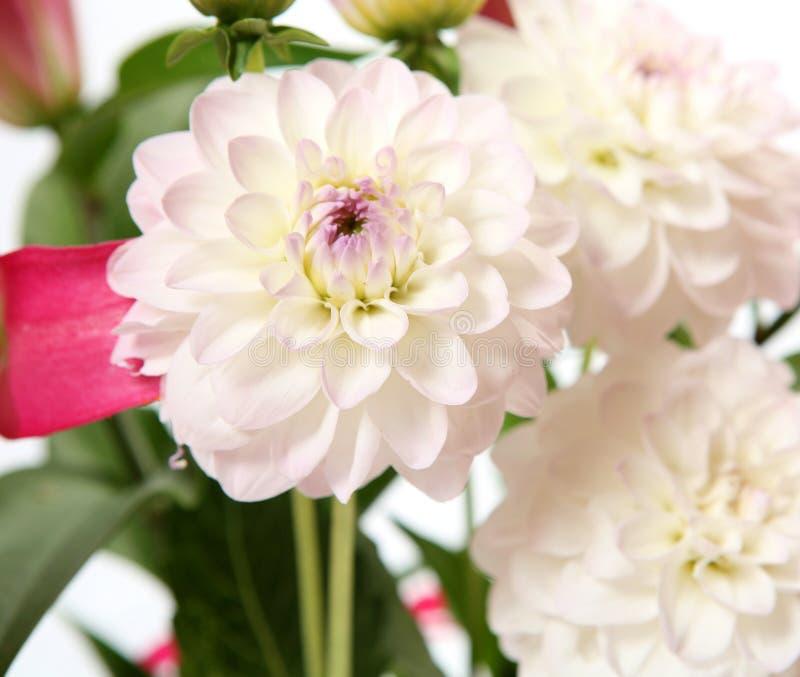 Download λεπτά λουλούδια στοκ εικόνα. εικόνα από διακοσμητικός - 17057985