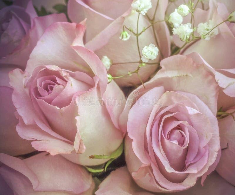 Λεπτά ρόδινα τριαντάφυλλα με τα μικρά άσπρα λουλούδια στην ανθοδέσμη στοκ εικόνες