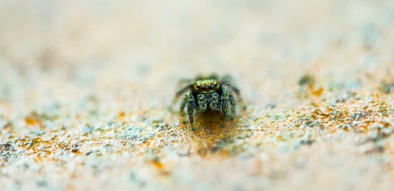 Λεπτή αράχνη στοκ εικόνα με δικαίωμα ελεύθερης χρήσης
