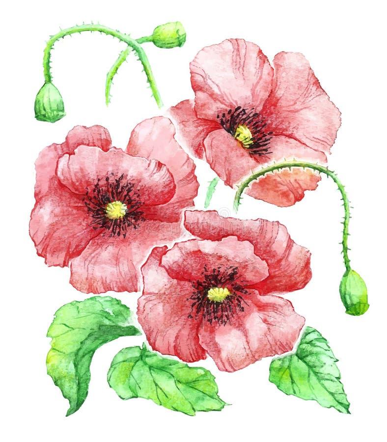 Λεπτή εκλεκτής ποιότητας ανθοδέσμη Watercolor των κόκκινων παπαρουνών στο άσπρο υπόβαθρο διανυσματική απεικόνιση