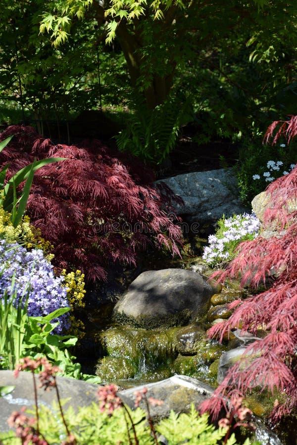 Λεπτομέρεια βοτανικών κήπων, colorfuly εγκαταστάσεις, runnel στοκ φωτογραφίες