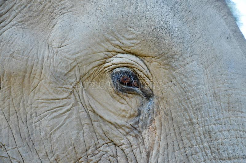 Λεπτομέρεια ενός ματιού ελεφάντων στοκ εικόνα