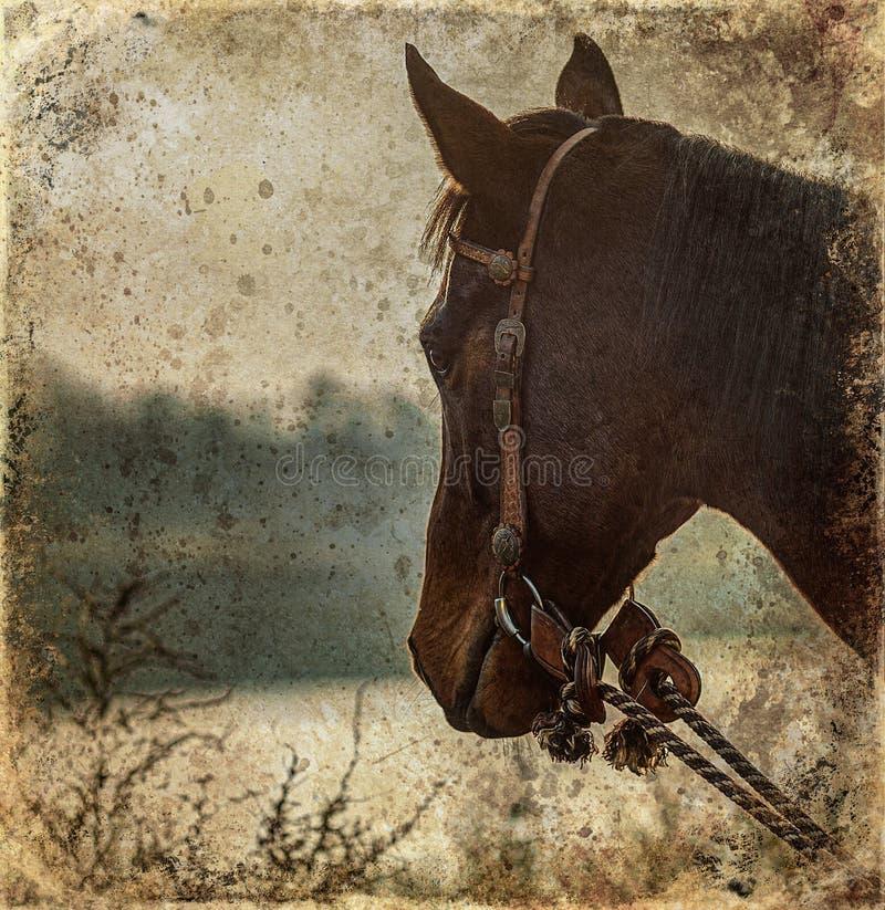 Λεπτομέρεια κεφαλής αλόγου σε τοπίο, κοντινό πορτρέτο στοκ φωτογραφίες