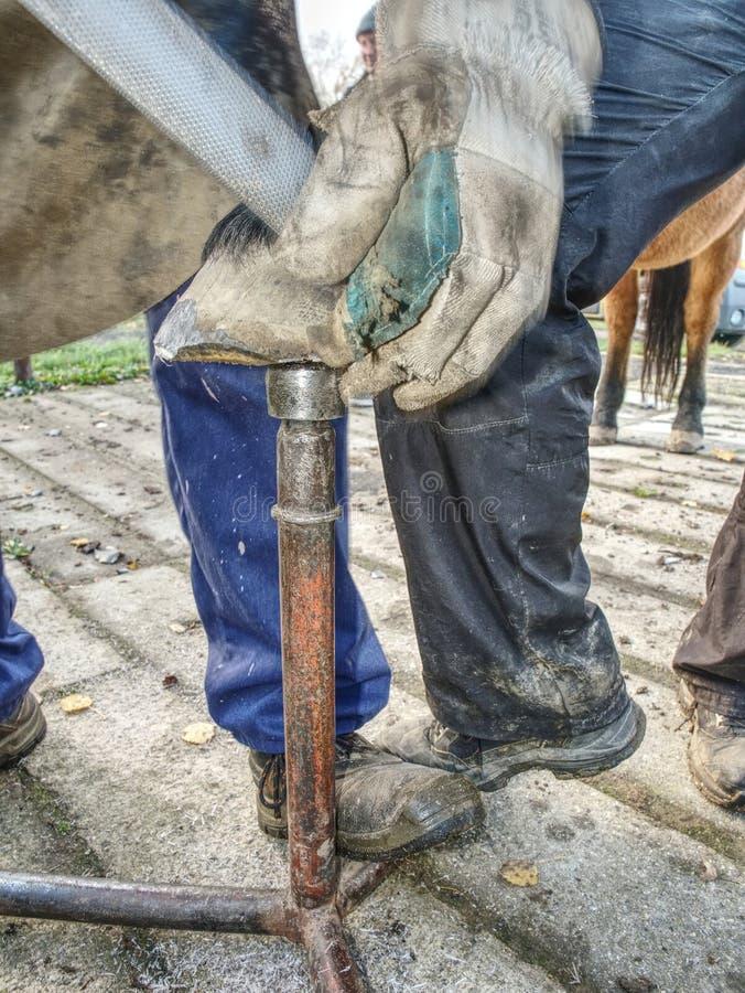 Λεπτομέρεια της εργασίας σιδηρουργών Το Stableman τροποποιεί την οπλή στοκ εικόνες με δικαίωμα ελεύθερης χρήσης