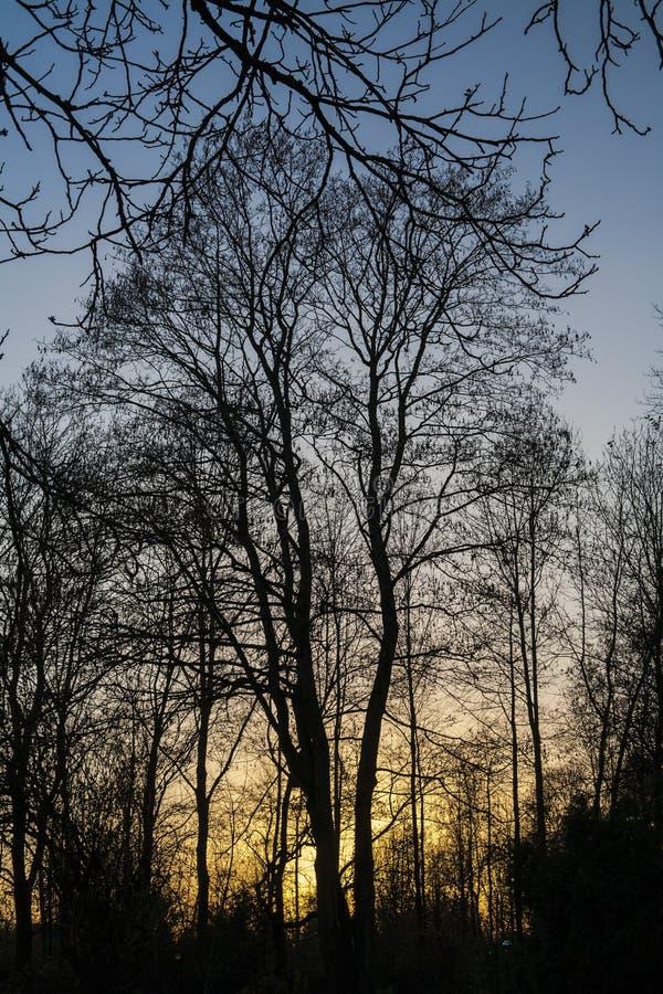 Λεπτομέρεια του ηλιοβασιλέματος με τα δέντρα χωρίς φύλλα το φθινόπωρο στοκ φωτογραφίες
