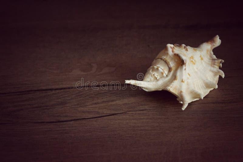 Λεπτομέρεια του κοχυλιού θάλασσας στοκ φωτογραφία