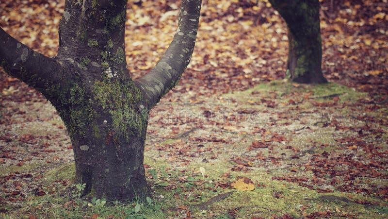 Λεπτομέρεια του τοπίου φθινοπώρου στοκ φωτογραφία