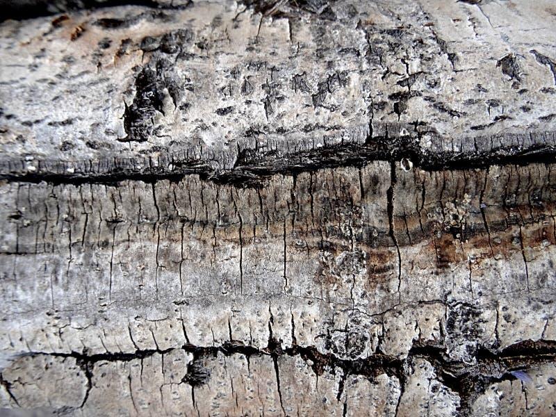 Λεπτομέρεια του φλοιού της άσπρης σημύδας - ενδιαφέρουσα ξύλινη σύσταση στοκ εικόνες με δικαίωμα ελεύθερης χρήσης