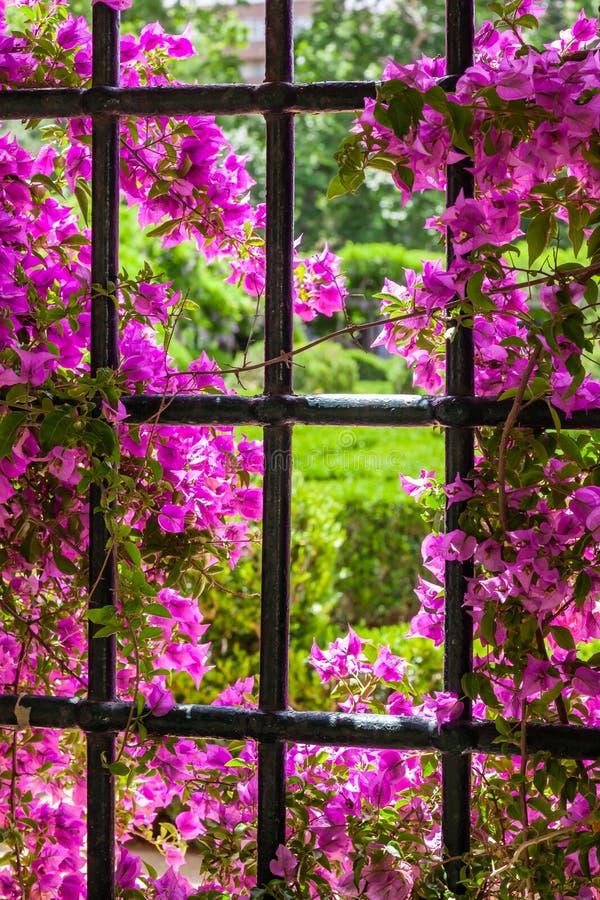 Λεπτομέρεια των κήπων του Quinta DA Fidalga στοκ εικόνες