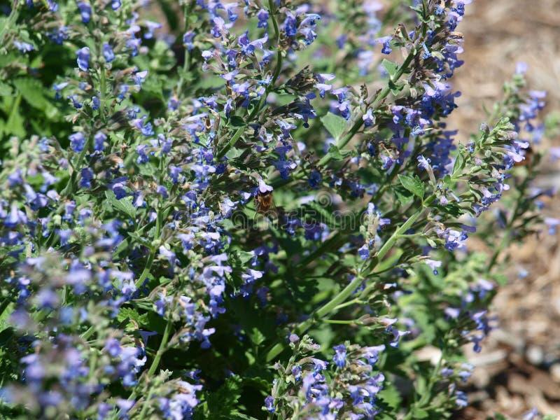 Λεπτομέρεια φτερών μιας μέλισσας μελιού στοκ φωτογραφία με δικαίωμα ελεύθερης χρήσης