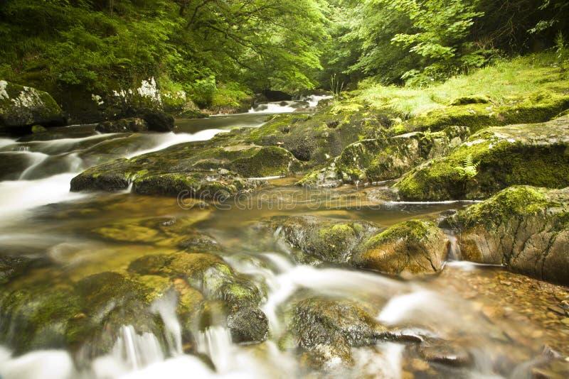 λεπτομέρεια riverbank στοκ εικόνες με δικαίωμα ελεύθερης χρήσης