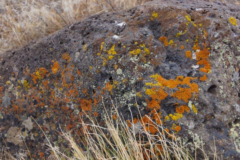 Λεπτομέρειες, λαμπρά χρωματισμένη λειχήνα στο ηφαιστειακό boulde στοκ φωτογραφία