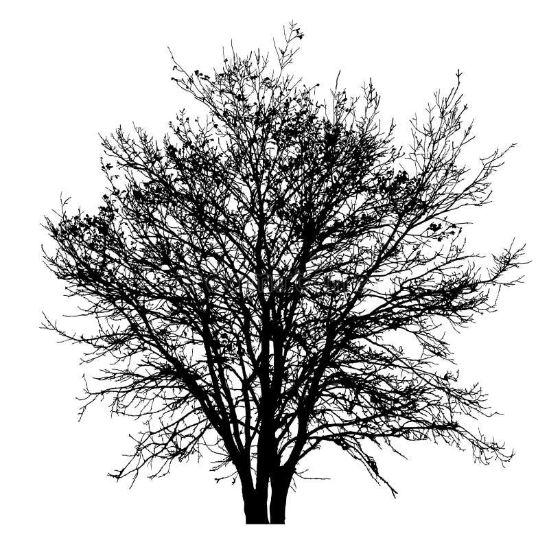 λεπτομερές δέντρο σκιαγραφιών διανυσματική απεικόνιση