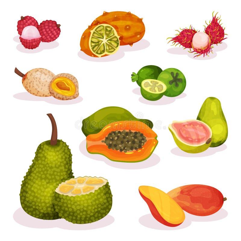 Λεπτομερές επίπεδο διανυσματικό σύνολο διάφορων εξωτικών φρούτων Χορτοφάγος διατροφή Οργανικά και νόστιμα τρόφιμα κατανάλωση υγιή απεικόνιση αποθεμάτων