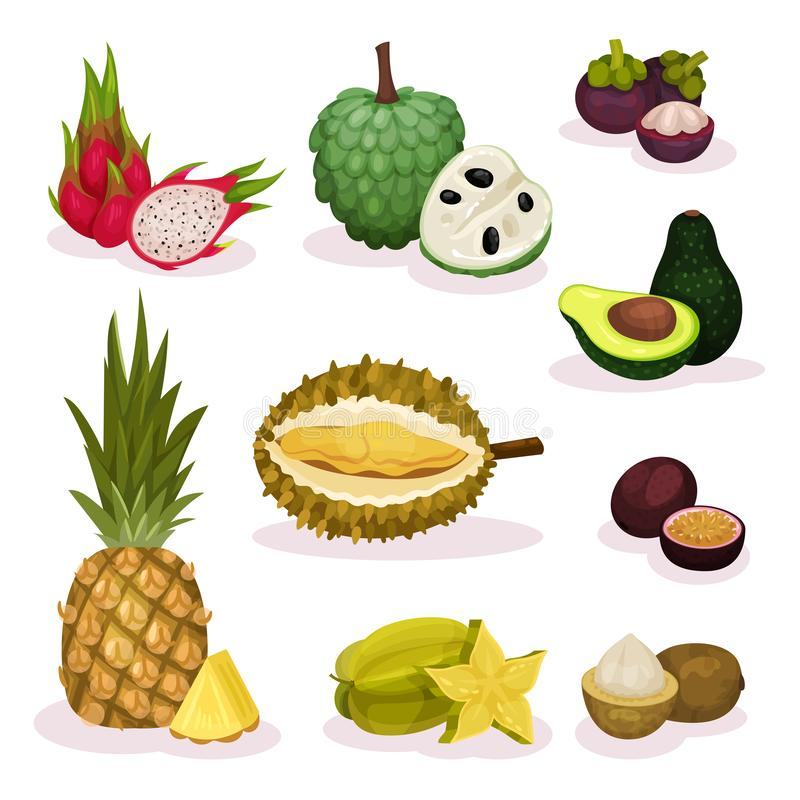 Λεπτομερές επίπεδο διανυσματικό σύνολο διαφορετικών εξωτικών φρούτων Φυσικό προϊόν Οργανικά και νόστιμα τρόφιμα Χορτοφάγος διατρο ελεύθερη απεικόνιση δικαιώματος