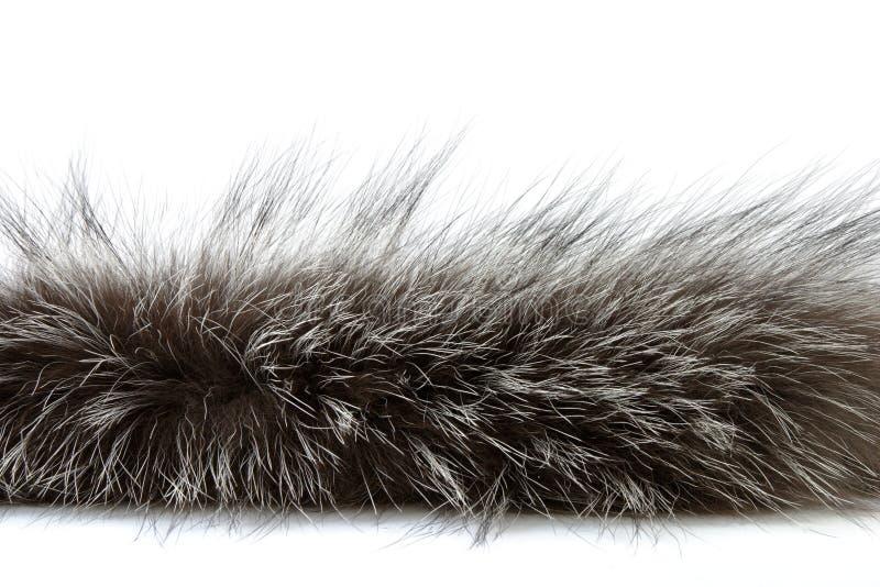 λεπτομερές πλάνο γουνών στοκ φωτογραφίες με δικαίωμα ελεύθερης χρήσης