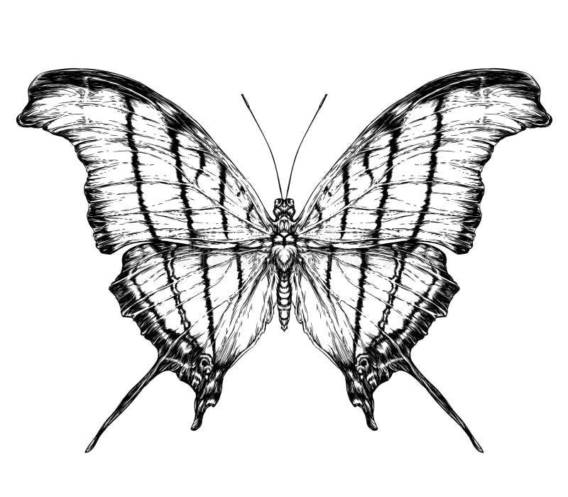 Λεπτομερές ρεαλιστικό σκίτσο μιας πεταλούδας διανυσματική απεικόνιση