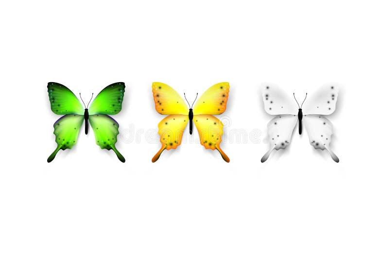 λεπτομερή πεταλούδα στ&omic Απομονωμένος στην άσπρη διανυσματική απεικόνιση υποβάθρου Καθιερώνον τη μόδα στοιχείο σχεδίου ελεύθερη απεικόνιση δικαιώματος